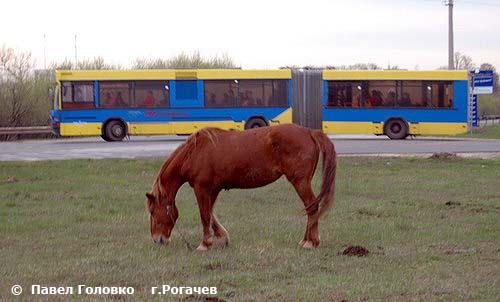 Рогачев – город в Гомельской